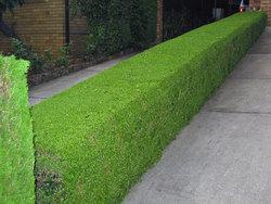 dundas-garden-hedge-seat-xg